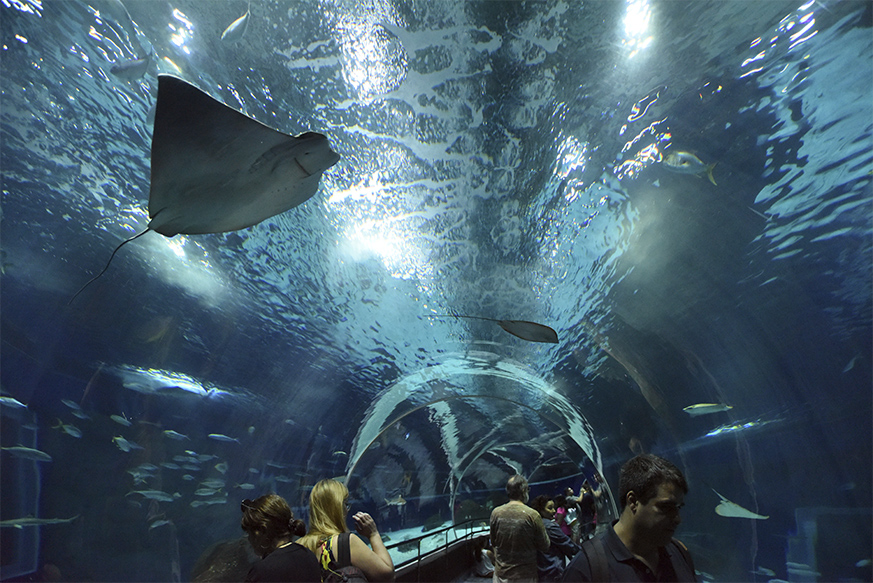Visita ao Aquario Marinho do Rio